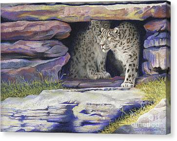 A New Day - Snow Leopards Canvas Print by Tracy L Teeter