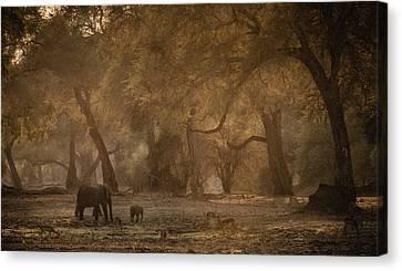Elephants Canvas Print - A New Morning by Giovanni Casini