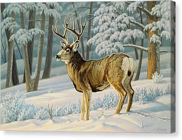 Mule Deer Canvas Print - A Nice Buck by Paul Krapf