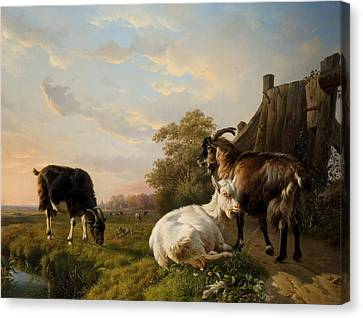A Pack Of Goats Canvas Print by Jacques Raymond Brascassat