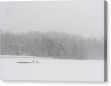 A Pair Of Canada Geese On A Snow Canvas Print by Stephen Alvarez
