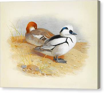Newy Ork Canvas Print - A Pair Of Smew Ducks by Celestial Images