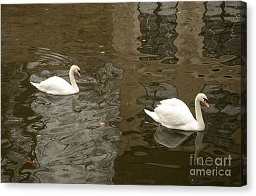 Canvas Print featuring the photograph A Pair Of Swans Bruges Belgium by Imran Ahmed