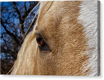 A Palomino's Eye. Canvas Print by Doug Long