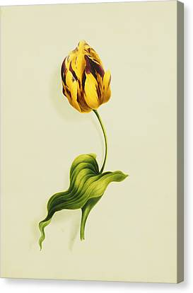 A Parrot Tulip Canvas Print by James Holland