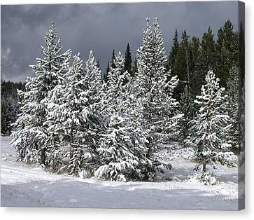 A Patch Of Sun Canvas Print by Shane Bechler