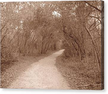 Canvas Print featuring the photograph A Path In Life by Beth Vincent