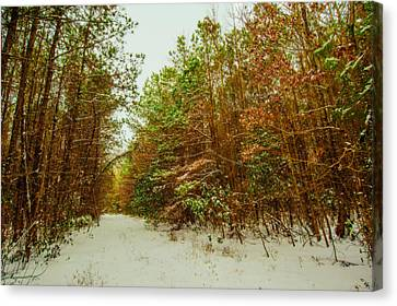 A Path In Winter  Canvas Print by John Harding