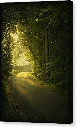 A Path To The Light Canvas Print by Evelina Kremsdorf