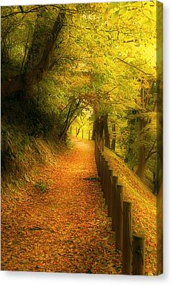 A Path Well Chosen Canvas Print by Tim Ernst