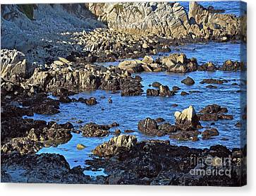 A Pelican's Rocky Retreat Canvas Print by Susan Wiedmann