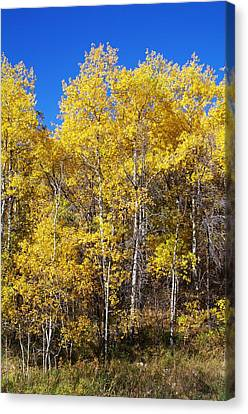 A Perfect Fall Day Canvas Print