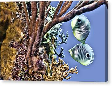 Canvas Print featuring the photograph Two Butterfly Fish And Coral Reef by Paula Porterfield-Izzo