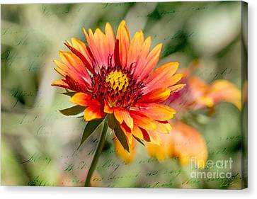 A Picture Of Cheer Canvas Print by Linda Lees