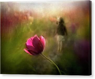 Pink Tulip Canvas Print - A Pink Childhood Memory by Shenshen Dou
