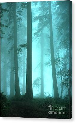 Thelightscene Canvas Print - A Place Of Awe by Bob Christopher