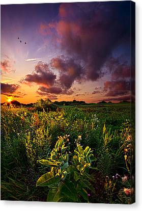 A Place To Camp Canvas Print by Phil Koch