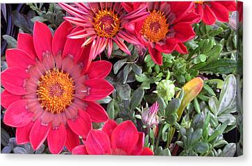 A Pop Of Pink Canvas Print by Debi Singer