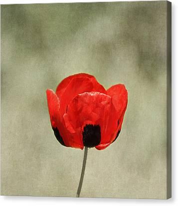 A Pop Of Red And Black Canvas Print by Kim Hojnacki