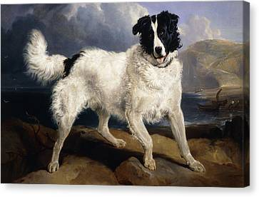 Standing Canvas Print - A Portrait Of Neptune by Sir Edwin Landseer