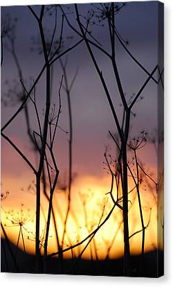 Canvas Print featuring the photograph A Queen's Sunset by Jani Freimann