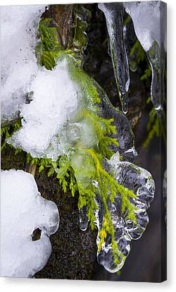 A Quick Freeze Canvas Print