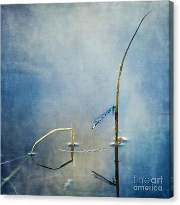 Blades Canvas Print - A Quiet Moment by Priska Wettstein