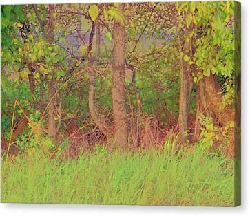 A Quiet Place Canvas Print by Shirley Moravec