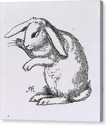 A Rabbit Canvas Print by British Library