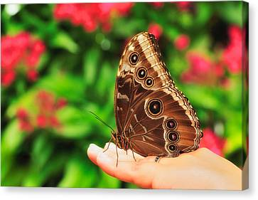 A Random Walk In The Butterfly Garden Canvas Print by Photography  By Sai