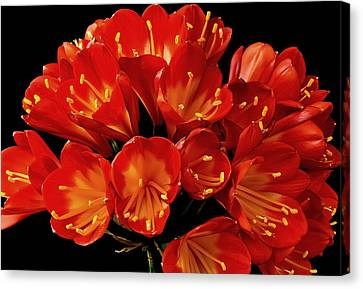 A Red Bouquet Canvas Print by Marwan Khoury