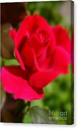 Canvas Print featuring the photograph A Red Rose by Jay Nodianos