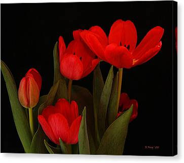 A Red Tulip Day Canvas Print by Roena King