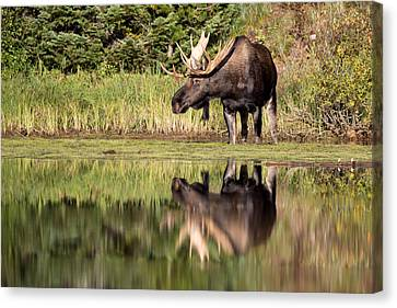A Reflective Mood Canvas Print by Jack Bell