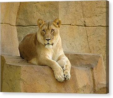 A Regal Presence Canvas Print