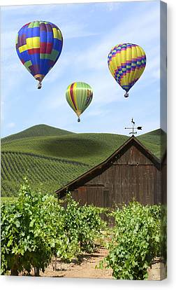 Grape Vines Canvas Print - A Ride Through Napa Valley by Mike McGlothlen