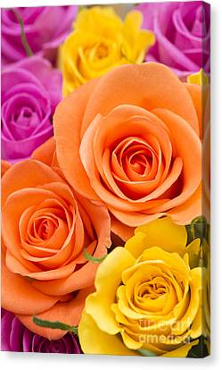 A Riot Of Roses Canvas Print by Anne Gilbert