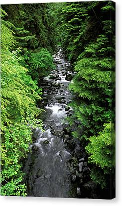 A River Runs Through It Canvas Print by Russ Bishop