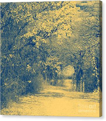A Road Framed With Trees Canvas Print by Mickey Harkins