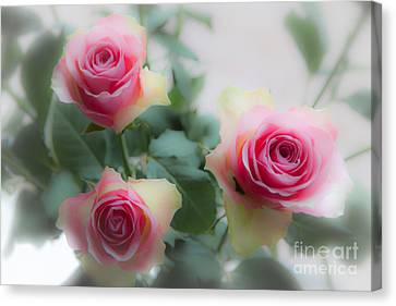 A Rose And A Rose And A Rose Canvas Print