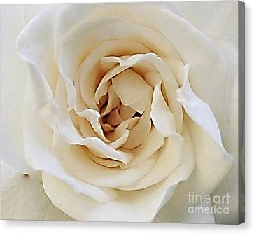 A Rose Is A Rose Canvas Print by Rosemary Aubut
