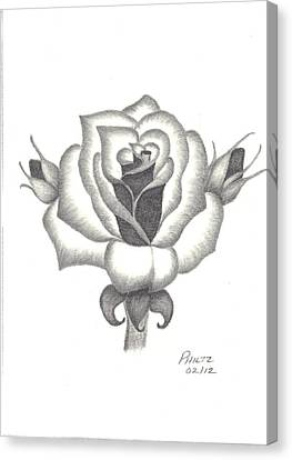 Canvas Print featuring the drawing A Rose  by Patricia Hiltz