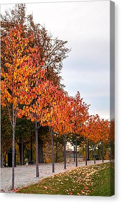 A Row Of Autumn Trees Canvas Print