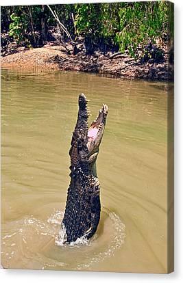 A Saltwater Crocodile (crocodylus Canvas Print by Miva Stock