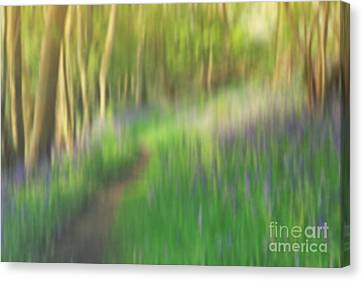 A Sea Of Bluebells Canvas Print
