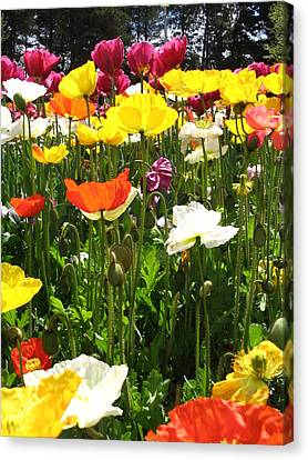 A Sea Of Poppies Canvas Print