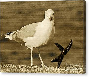 A Seagull Kind Of Day Canvas Print