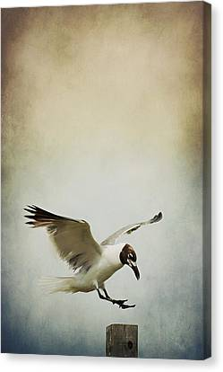 A Seagull's Landing Canvas Print