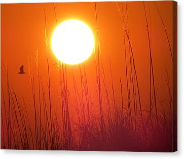 A Seagull's Sunrise Canvas Print