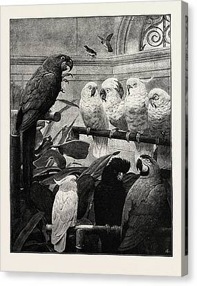 A Select Committee Canvas Print by English School